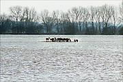 Nederland, Doorneburg, 6-1-2003Twaalf wilde konikpaarden zijn ingesloten door het hoge Waalwater.Sommigen staan al met de hoeven in het water. Stichting de Ark, die het natuurgebied beheerd, was te laat om ze naar hoger land te drijven. Hun hangt een aanklacht boven het hoofd. Het water heeft het hoogste punt bereikt, maar met een verwachte vorst komende nacht van 10 graden wordt voor het leven van de dieren gevreesd. Foto: Flip Franssen/Hollandse Hoogte