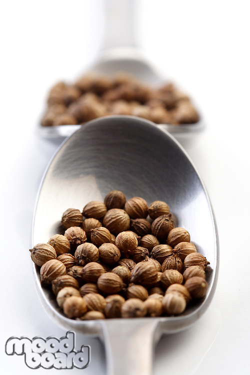 Mutard seeds on a spon