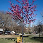 Plastic tree.Sant Cugat del Vallés.Barcelona.Catalonia.Spain.