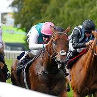 Morpheus and Tom Queally winning the 4.50 race