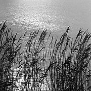 Ondergaande zon in het water met riet van het Gooimeer gezien vanaf Almere