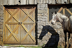 Um cavalo é visto perto de uma antiga casa em Monte Belo do Sul, no interior de Bento Gonçalves. FOTO: Jefferson Bernardes/Preview.com