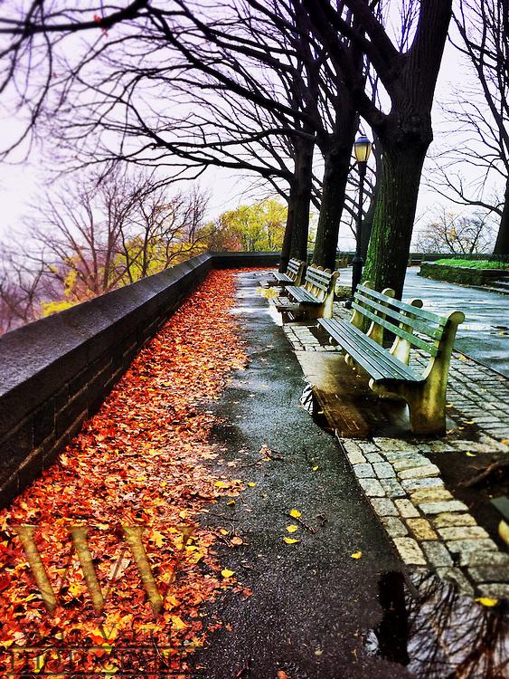 Linden Park Bench Lookout
