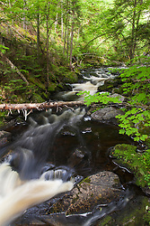Cold Stream in Maine's Northern Forest. Cold Stream Gorge. Johnson Mountain Township.