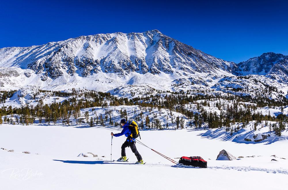 Backcountry skier under Mount Morgan, John Muir Wilderness, Sierra Nevada Mountains, California  USA