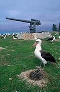 Albatross, Midway Island, N.W. Hawaiian Chain<br />