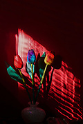 colourful wood tulip flowers in a dark room with directional lighting through wooden blinds