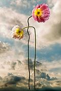 Contemporary Visual Art Photography
