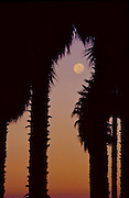 Full moon through palm trees with colorful twilight