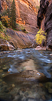 Narrows of the Virgin river in Zion National Park, southern Utah.