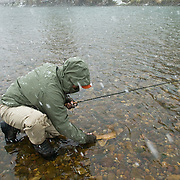 A fly fisherman releases a Yellowstone cutthroat trout during a snowstorm on the South Fork of the Snake River, Idaho.