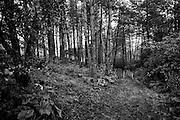 Sinntal-Sterbfritz | Deutschland | 12.08.2016: Der Sch&auml;fer Kurt Hartmann h&uuml;tet seine Schafe im Naturschutzgebiet &quot;Stephanskuppe&quot;. Die Bioschafherde mit 10% Ziegen dient im Naturschutzgebiet auf der Landschaftspflege.<br /> <br /> hier: <br /> <br /> Sascha Rheker<br /> 20160812<br /> <br /> [Inhaltsveraendernde Manipulation des Fotos nur nach ausdruecklicher Genehmigung des Fotografen. Vereinbarungen ueber Abtretung von Persoenlichkeitsrechten/Model Release der abgebildeten Person/Personen liegt/liegen nicht vor.]
