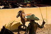 31 AUGUST 2007 -- PHOENIX, AZ: Charros compete in the piales en lienzo - or the roping of the feet - in which three charros throw a lariat to catch and stop a mare by roping the hind legs at the Congreso y Campeonato Nacional Charro in Phoenix, AZ, Friday, August 31. The event is the US championship for the Mexican Federacion Mexicana de Charreria. The winners of the US championship go on to compete in the Mexican Charreada championships in Morelia, Michoacan, Mexico in October. Charreadas are Mexican style rodeos that are popular in Mexican communities throughout the US. As the Mexican immigrant community has expanded throughout the US, the sport has expanded with it. Charreadas are now held as far north as Minnesota and along the US - Mexico border.   Photo by Jack Kurtz