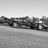 D-Type Jaguars.