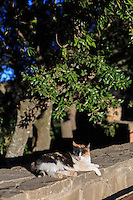 A cat enjoys the late afternoon sun near the Montserrat monastery in Barcelona, Spain