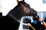 Hot Scoop ridden by Nicola Currie and trained by J A Osborne is cooled down after winning the Sky Sports Racing Sky 415 Maiden Auction Stakes (Class 5) (2YO only) - Mandatory by-line: Robbie Stephenson/JMP - 25/06/2020 - HORSE RACING - Bath Racecoure - Bath, England - Bath Races 25/06/20