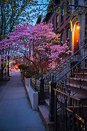 USA, East Coast, New York, Brooklyn, Park Slope
