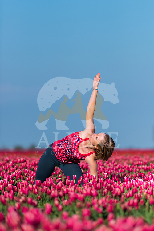 A female athlete practices yoga positions in a vast tulip field in the very heart of Dutch Friesland, Vierhuzen.
