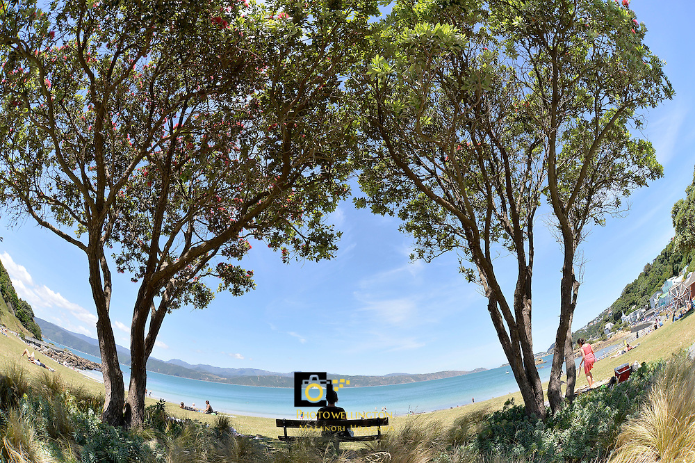 Summertime in Scorching Bay, Wellington, New Zealand on Friday 20 December 2013.<br /> Photo by Masanori Udagawa.<br /> www.photowellington.photoshelter.com
