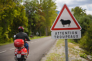 A driver on a motor scooter rides past a roadsign warning of possible sheep, or flock of sheep on the road in the south of France. http://www.gettyimages.com/detail/photo/motor-scooter-on-road-with-sheep-warning-sign-royalty-free-image/184058790