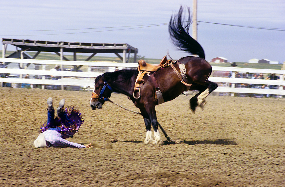 Rider falls from horse during rodeo in Faith, South Dakota, USA.