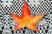 Nederland, 12-11-2012Prachtige rode, oranje en gele tinten van een blad in de herfst. Het is op de tuintafel gevallen.Foto: Flip Franssen/Hollandse Hoogte