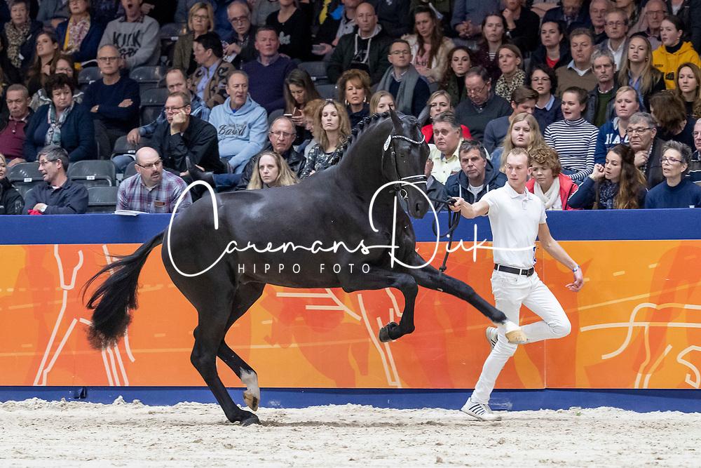386, Lacrosse RS2<br /> KWPN Hengstenkeuring - 's Hertogenbosch 2019<br /> © Hippo Foto - Dirk Caremans<br /> 02/02/2019
