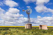 windmill and water tank in field of canola with cumulus cloud in sky near Urana, New South Wales, Australia