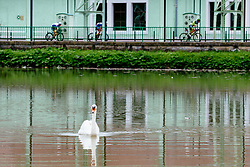 Swan, cyclists and hydroelectric power plant Faladuring 2nd Stage of 25th Tour de Slovenie 2018 cycling race between Maribor and Rogaska Slatina (152,7 km), on June 14, 2018 in  Slovenia. Photo by Vid Ponikvar / Sportida