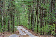 The road through woods, Two Holes of Water Rd,  East Hampton, N