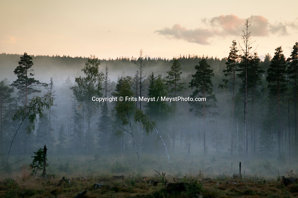 Kopparberg to Safsen, Sweden, August 2011. Late evening light makes the scenery magical next to the road between Kopparberg and Safsen. The region is covered with green forest, peat swamps and lakes and has more moose than people.  Photo by Frits Meyst/Adventure4ever.com