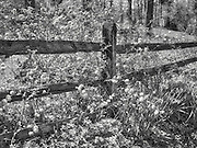 Fence and flowers in full sun.