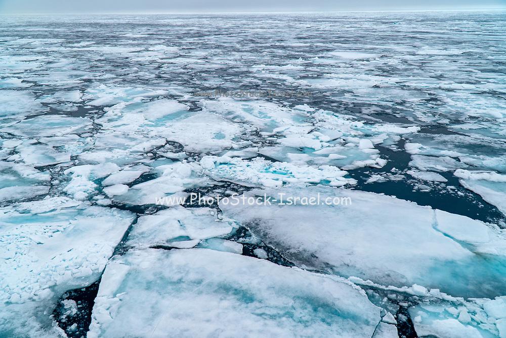 Arctic Sea ice floe. Photographed in Spitsbergen, Svalbard, Norway
