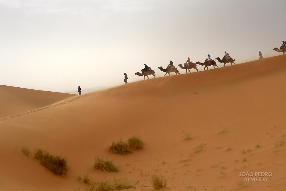 A camel caravan moving at the sand dunes of the Sahara Desert
