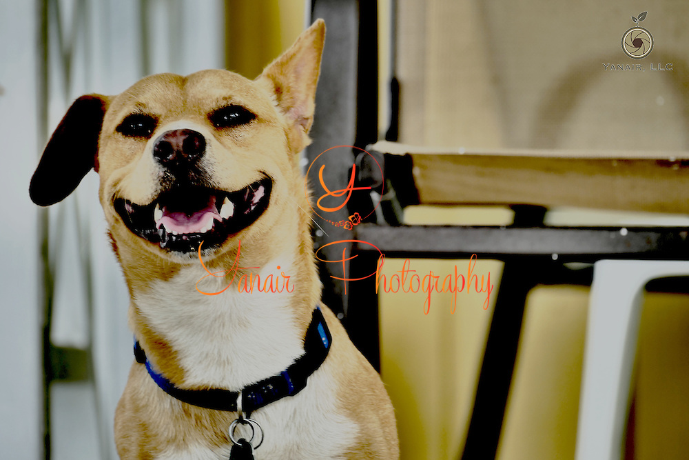 Smiling Dog<br />