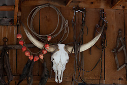 Longhorn skull hanging on wall with horse bridle.