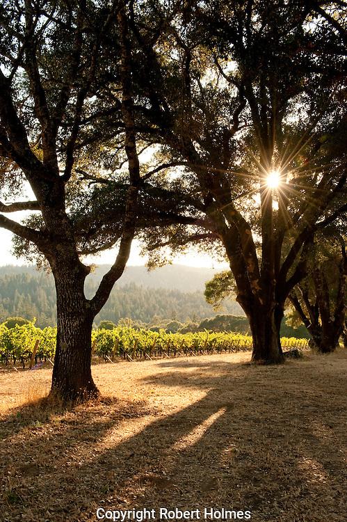 River's Rest vineyard, Anderson Valley, Mendocino
