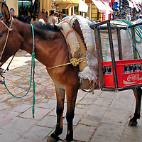 Donkey Carrying Coke in Fes el Bali at Fez, Morocco <br /> Fes el Bali covers 692 acres and is one of the largest, pedestrian-only zones in the world. All supplies into and out of this ancient city are carried by hand, carts, donkeys and an occasional scooter. This bridled mule carrying Coca-Cola products may seem docile.  But if you hear someone shout &ldquo;balak&rdquo; or &ldquo;andak,&rdquo; it means you are about to be run over by a pack animal.