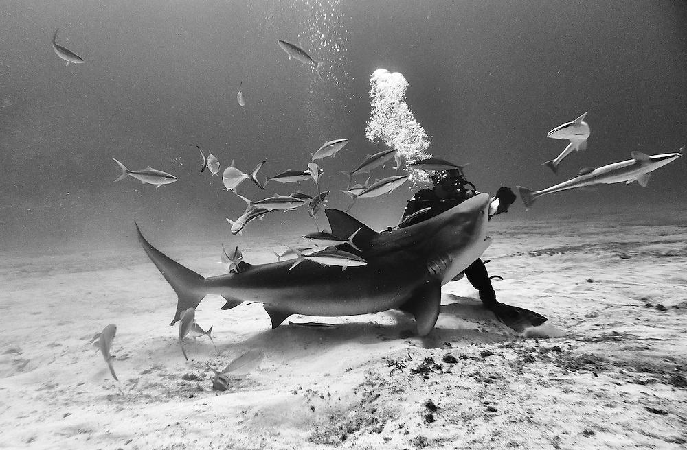 In Playa del Carmen, Mexico, Bull sharks are now common residents.<br />
