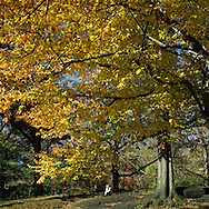 Autumn colors near the Sailboat Pond in Central Park, New York City.