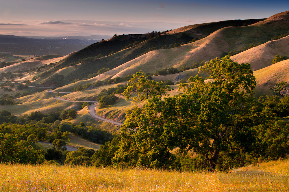 Twisting curves on road through grass hills and oak trees at sunset, Mount Diablo State Park, California