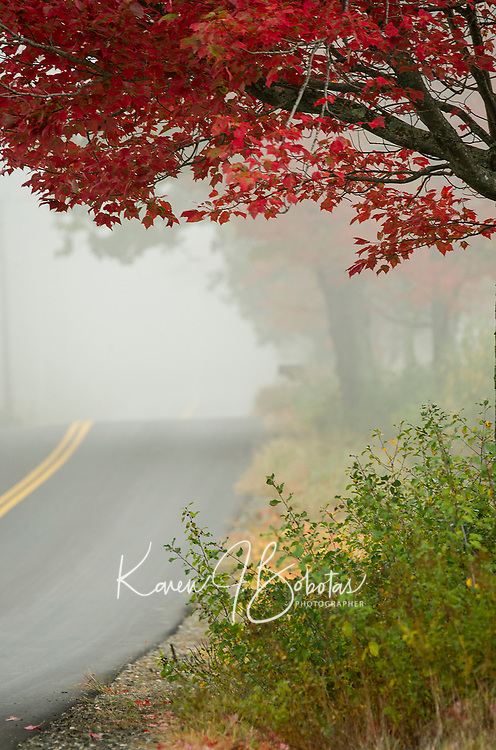 Cold, wet, foggy, Monday morning - yet still a beautiful drive down the road.  (Karen Bobotas/for the Laconia Daily Sun)