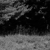 Natural Light  (Mendon Ponds NY)