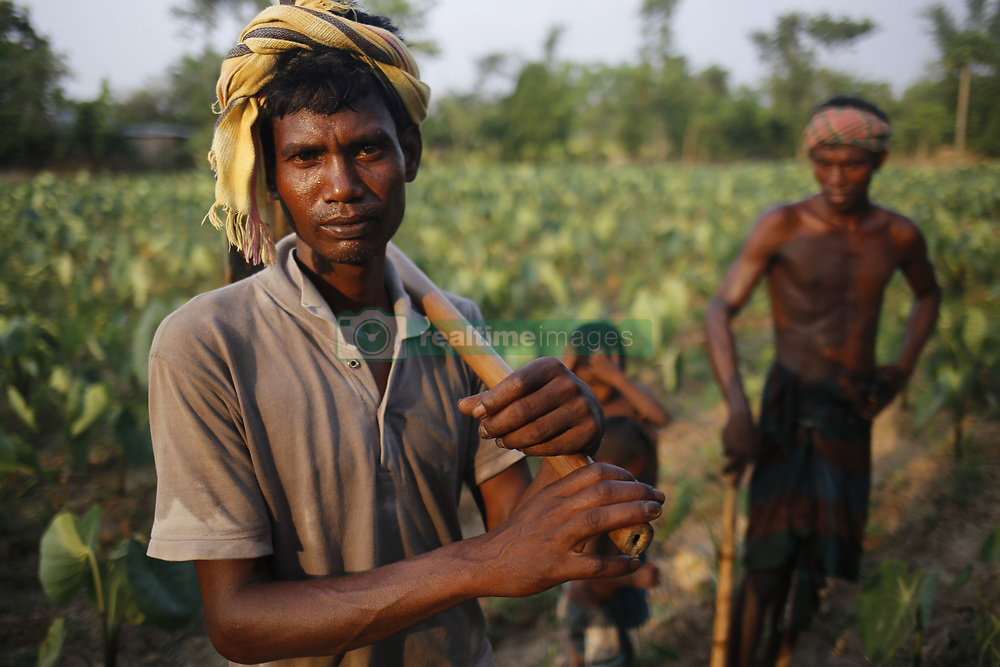 May 1, 2019 - Naogaon, Bangladesh - A day labor poses for a photo as his work in a vegetable field on mayday near in Dhamoirhat upazila of Naogaon district. Day labor earns around $4 per day in rural areas. (Credit Image: © MD Mehedi Hasan/ZUMA Wire)