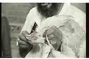 Vintage image of Slaughtering a chicken during The Kaparot prayer. Mea Shearim, Jerusalem, Israel<br /> Kaparot, an aged old Jewish tradition were a chicken is waved over the believer?s head, reliving the person from all sins which are passed on to the chicken. The chicken is slaughtered and at times given to charity.<br /> Black and white grainy image