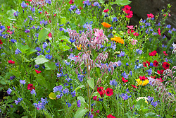 Throw and grow wild flower mix