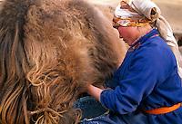 Mongolie. Province d'Arkhangai en hiver. Heure de la traite. Yak. // Mongolia. Arkhangai province in winter. Time for milk.