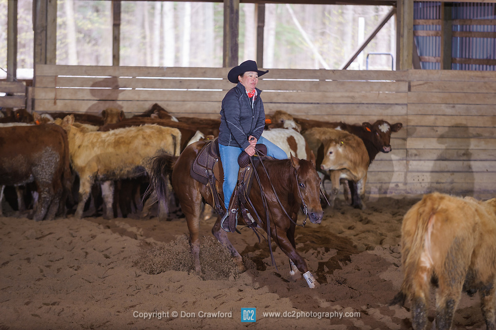 April 29 2017 - Minshall Farm Cutting 1, held at Minshall Farms, Hillsburgh Ontario. The event was put on by the Ontario Cutting Horse Association. Riding in the 2,000 Limited Rider Class is Katie Leung on Missancattin owned by the rider.