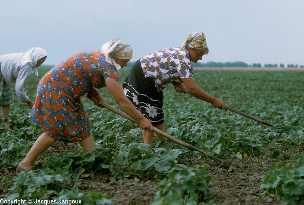 USSR (Union of Soviet Socialist Republics) 1968. Ukraine. Women working in cucumber field in a sovkhoz (state farm) near Kiev.