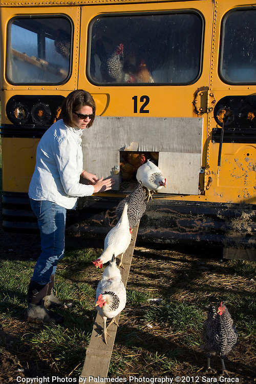 The 'Free Range Rover' is Breakneck Acre's school bus turned chicken coop. The bus keeps the chickens safe at night and makes  a unique attraction for visiting customers.